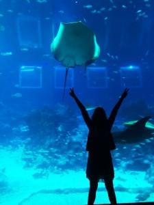 Огромный аквариум в Сингапуре Сентоза