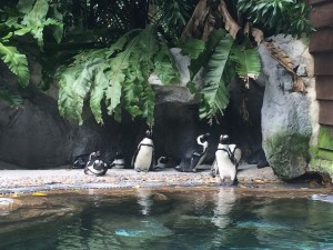 Пингвины в зоопарке Сингапура