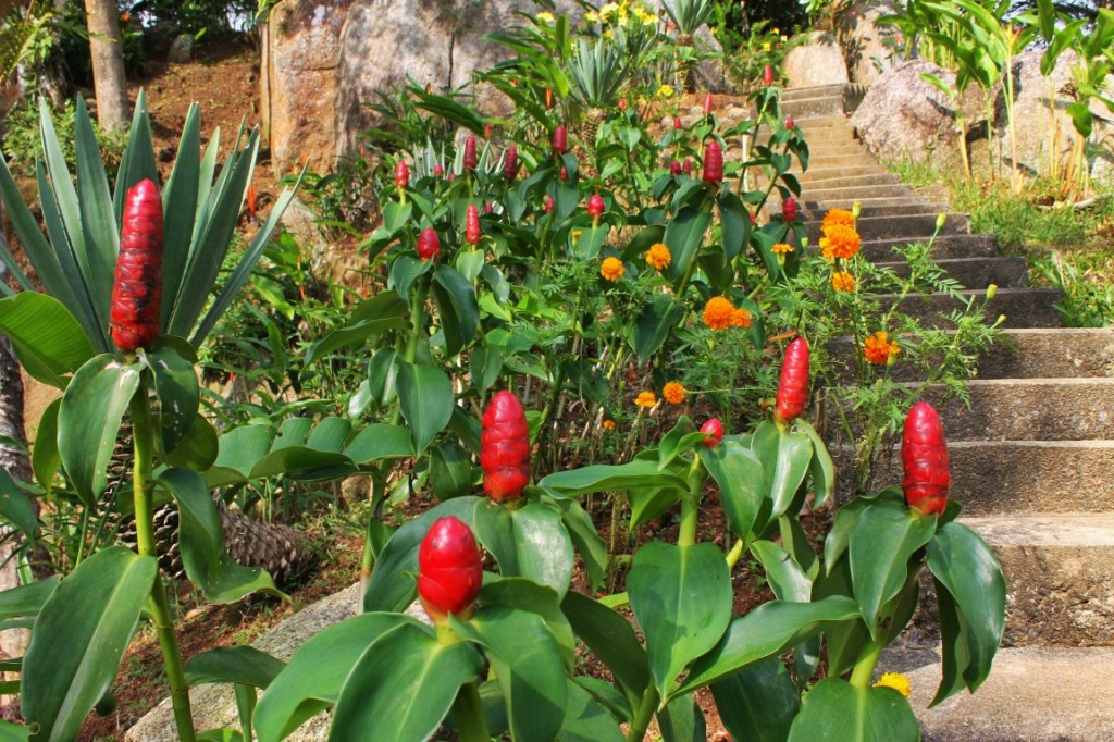 Достопримечательность Самуи - Paradise Park Farm