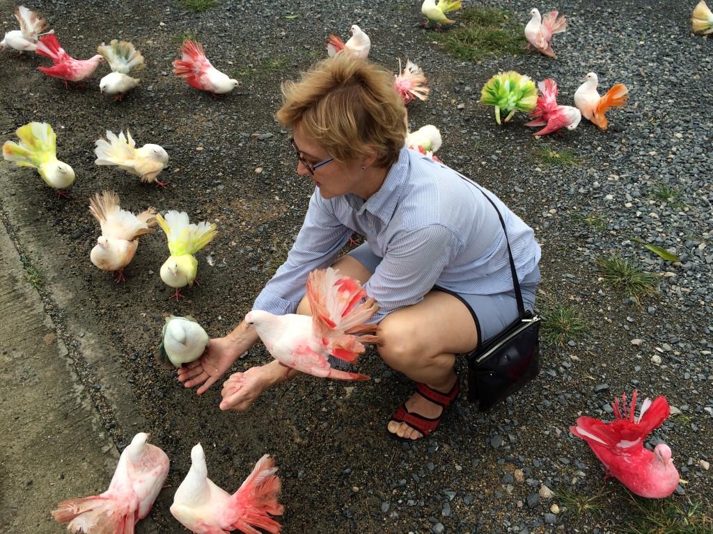 Paradise Park Самуи - разноцветные голуби