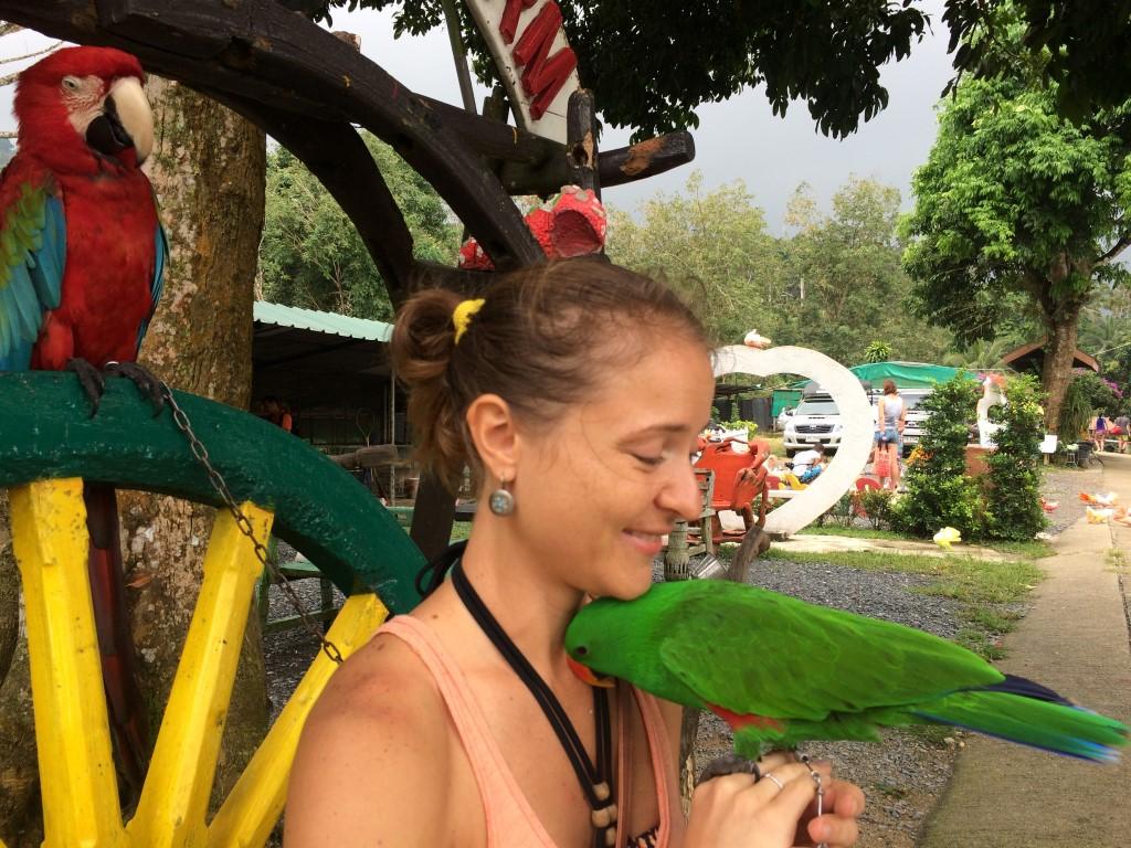 Paradise Park Самуи - нежный попугайчик